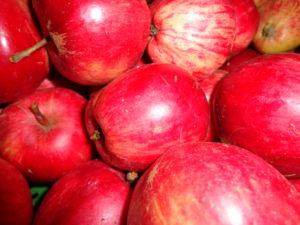 Vielfältige Sortenauswahl an frisch geerntetem Obst zum Probieren – für Allergiker und Kenner alter Obstsorten