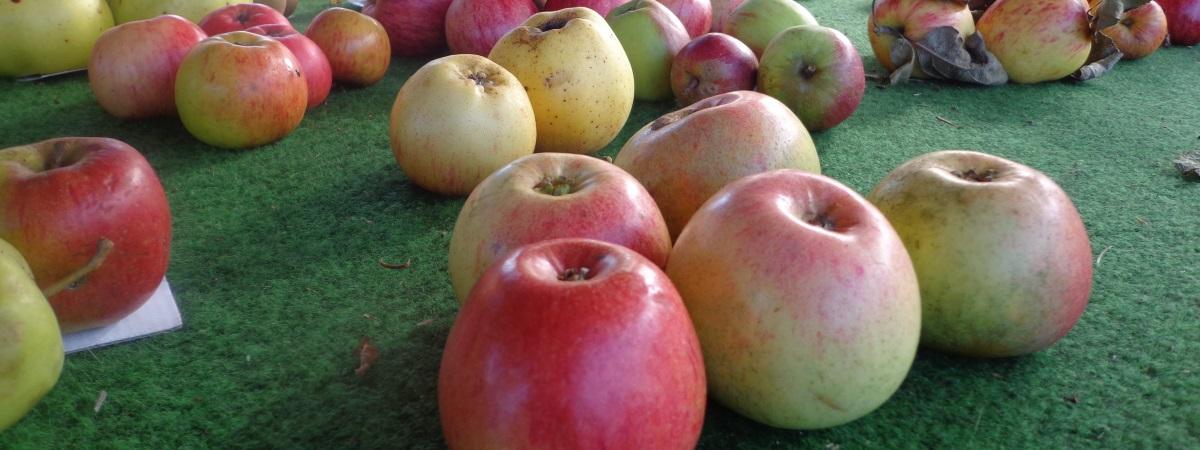 Obst für Allergiker