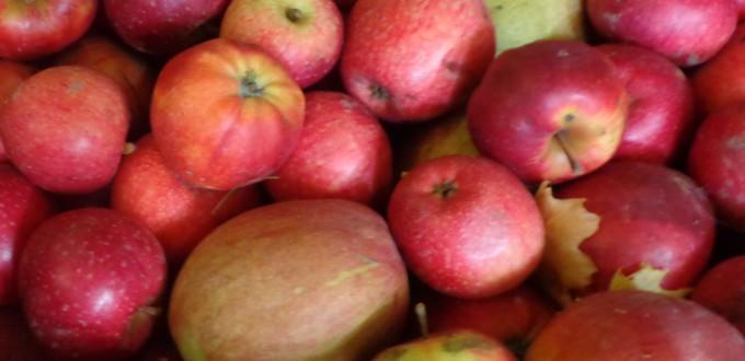 Kiste mit roten Äpfeln gemischt