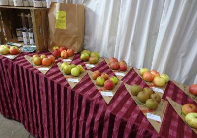 Einkaufsladen-Tisch-mit-Äpfeln-auf-Spitzt.-Holzkisten-als-Regal-400x280.jpg
