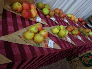 Früchte-in-den-Spitztüten-300x225.jpg