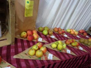 Früchte-in-den-Spitztüten-No.-2-300x225.jpg